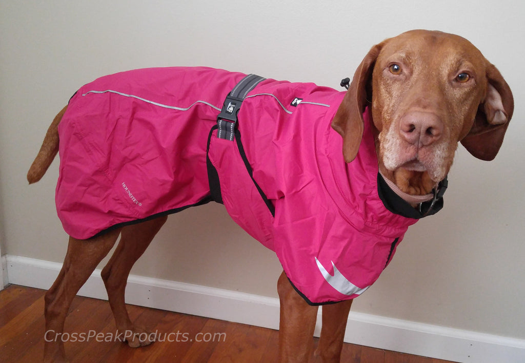 Vizsla in Torrent Rain Coat Cherry Color