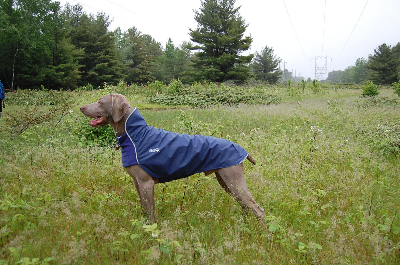 trail blazer blue fall jacket for dogs