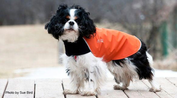 blaze orange dog coat for fall and spring
