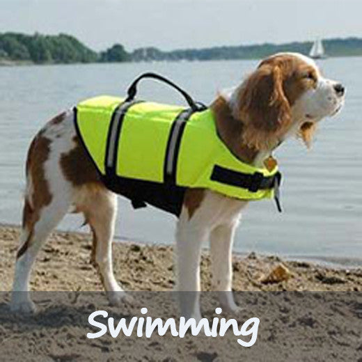 Swimming Dog Supplies