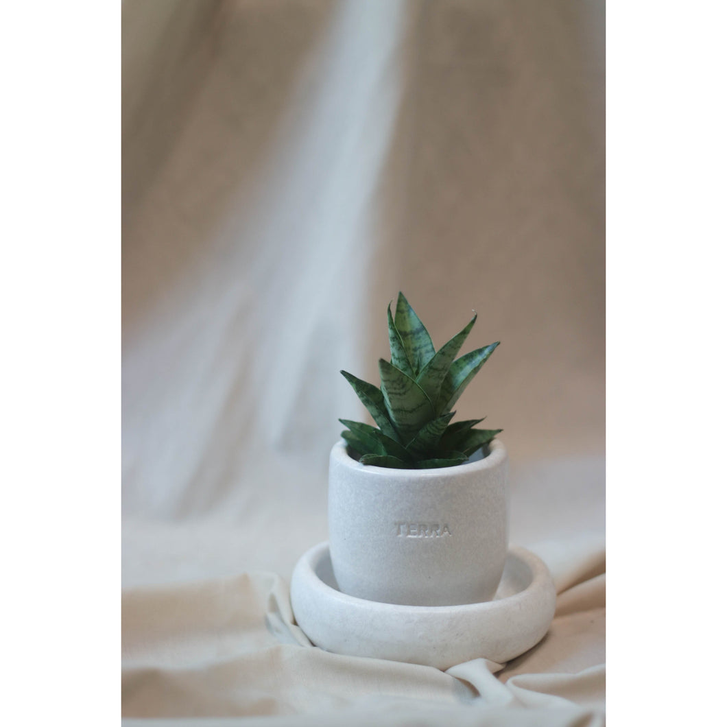 Indoor Plant in Mud Pots