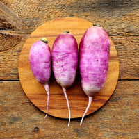 Purple Daikon Radishes - 1.5 lbs