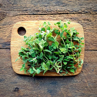 Oregano - 1 oz