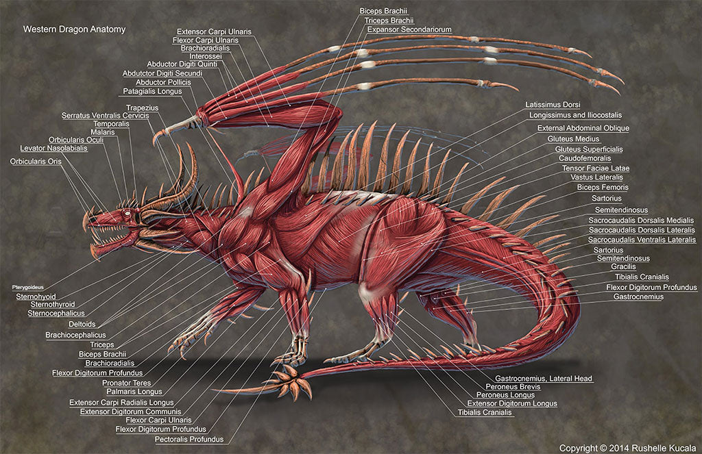 Anatomy of the dragon