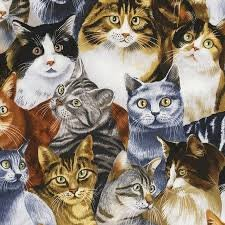 Cat Fabric - Packed Pets on Black -C5484 - Timeless Treasures