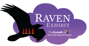 Raven Exhibit - One-Year License