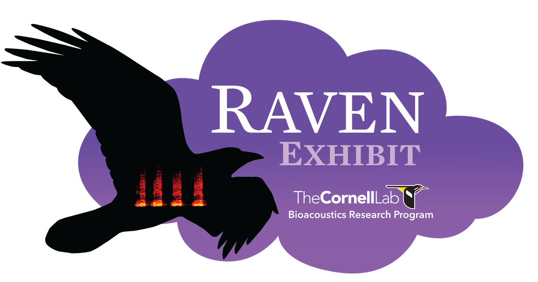 Raven Exhibit - Educational License