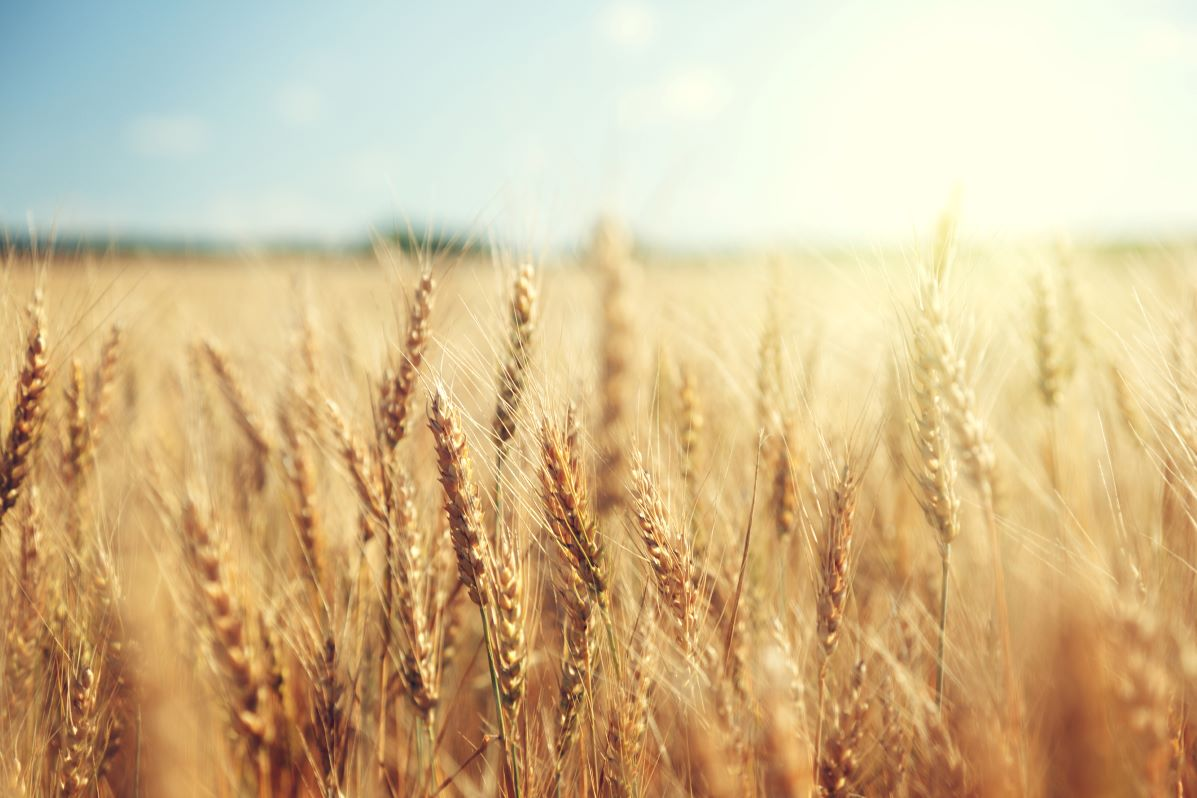 Grain, glorious grain! What's it all about?