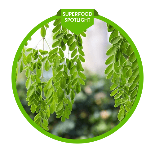 "Superfood Spotlight: Moringa - See why moringa is called the ""Miracle Tree"""