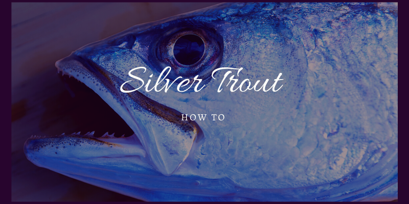 Silver Trout Fishing Tips for Success