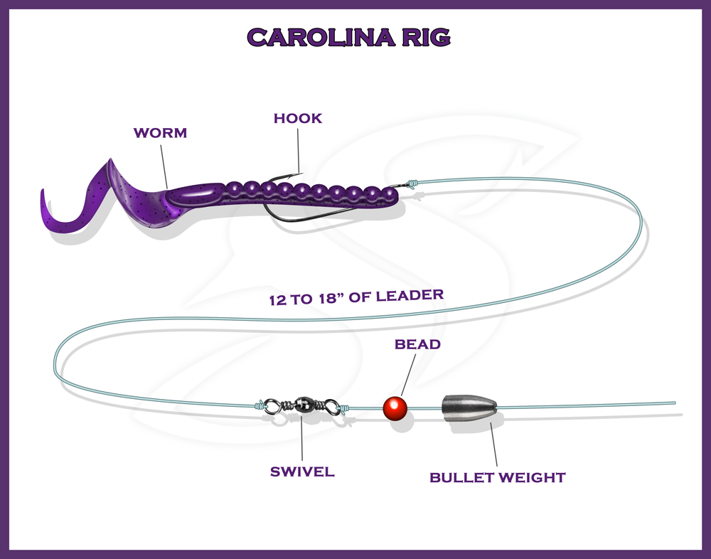 Carolina Rig Info Graphic