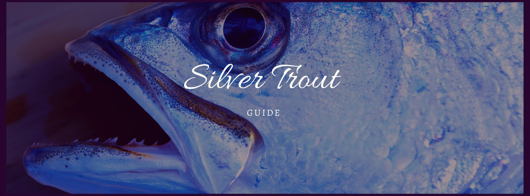 Silver Trout Fishing