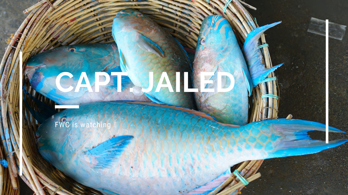 Capt. jailed for illegal catch