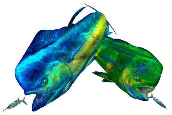 Dorado fish facts