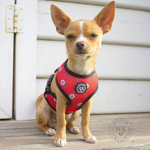 """Sushi Addict"" reversible dog harness"