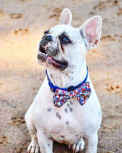 "Load image into Gallery viewer, ""Circus Days"" adjustable dog collar & bow tie"