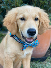 "Load image into Gallery viewer, ""Sushi Addict"" adjustable dog collar & bow tie"