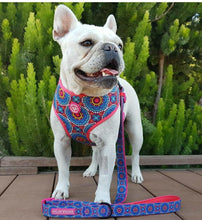 "Load image into Gallery viewer, ""Floral Mandala"" reversible dog harness"