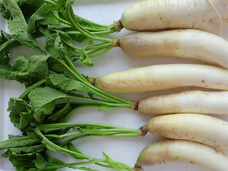 Local Baby Radish - Local Xiao Luo Bo 600g - SGWetMarket