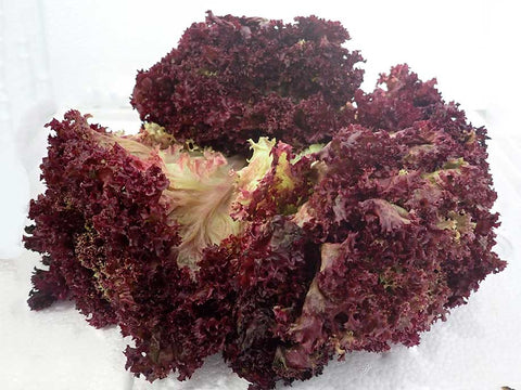Red Curly Lettuce - Red Fei Xu 400g - SGWetMarket