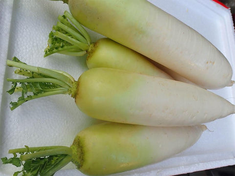 Local White Radish 600g - SGWetMarket