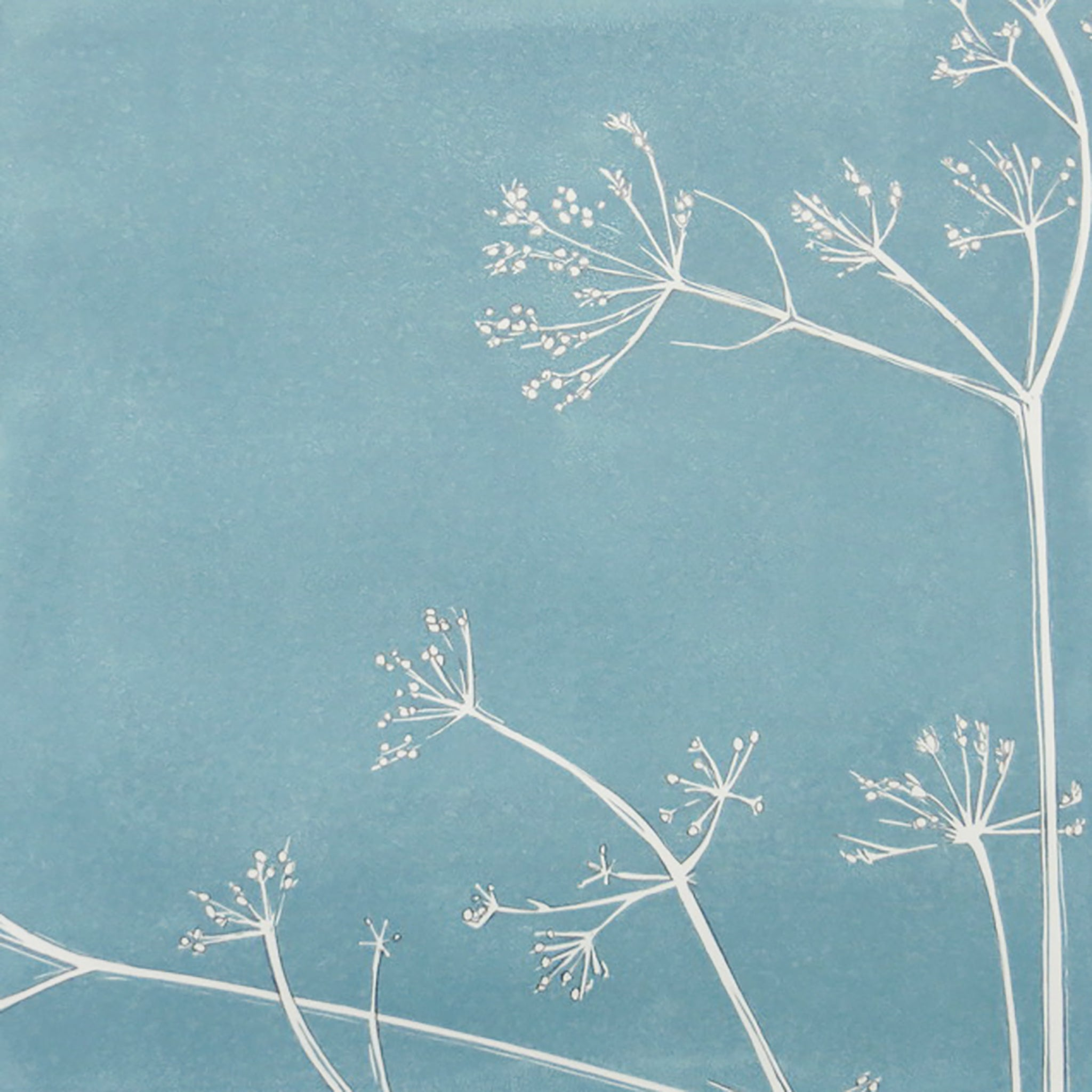 Cow Parsley by Sarah Knight