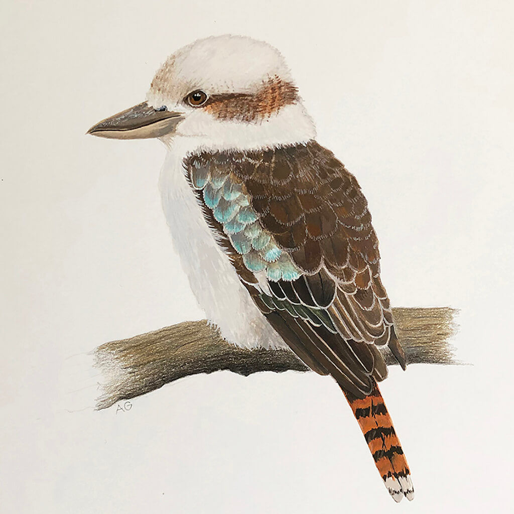 Australian kookaburra original gouache and pencil artwork by Amanda Gosse