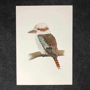 Australian kookaburra original gouache and pencil artwork by Amanda Gosse artist