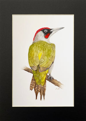 Green Woodpecker in Black Mount by Amanda Gosse Bird Artist