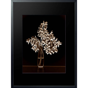Filigrana 01 digital style rayograph framed 80x60cm photograph by Michael Frank