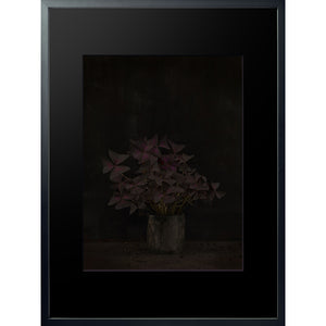 Dutch Masters 03 framed 60x80cm Oxalis Triangularis photograph by Michael Frank