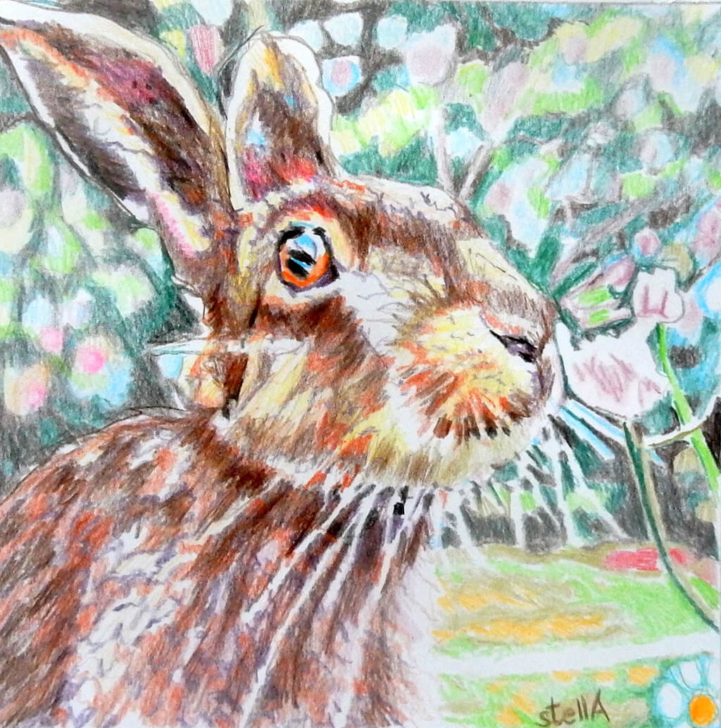 Harry the hare Original Artwork by Stella Tooth