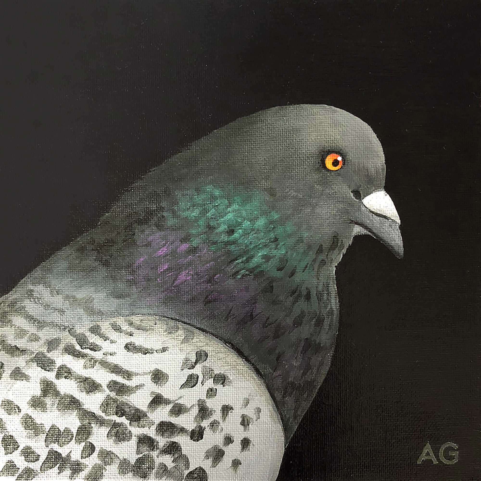 Pigeon head and shoulders bird portrait painting by Amanda Gosse. Acrylic on canvas small artwork.