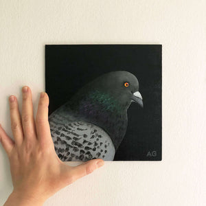 Pigeon head and shoulders bird portrait painting by Amanda Gosse. Acrylic on canvas small artwork on wall.