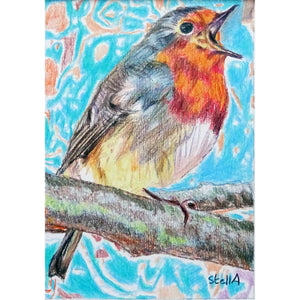 Robin Redbreast bird drawing by Stella Tooth London Artist full