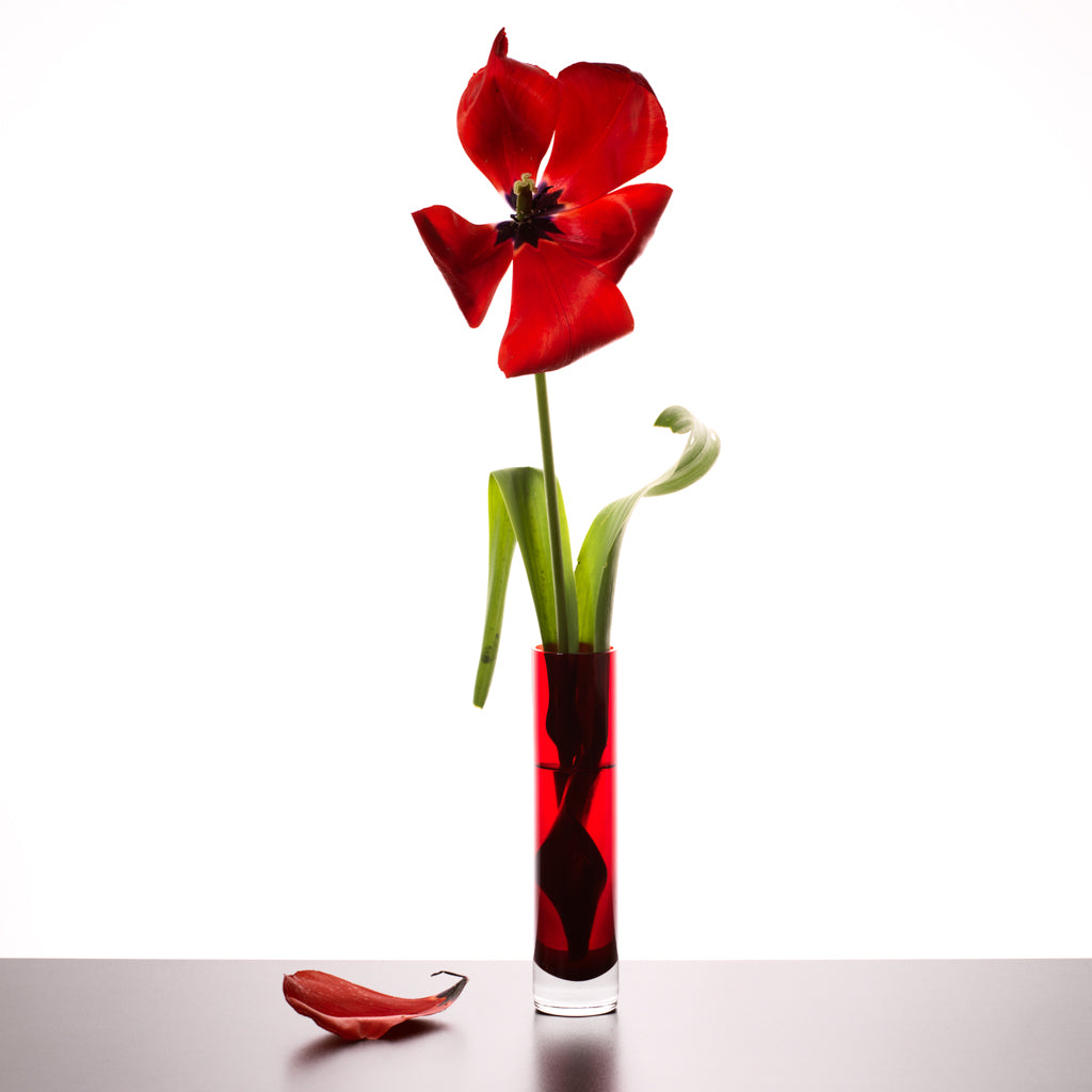 Imperfection red tulip photograph by Michael Frank
