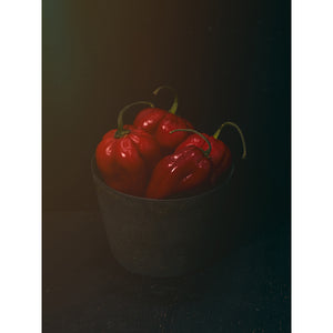 Dutch Masters 08 bucket with 4 red peppers by Michael Frank