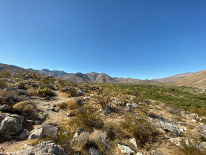 Lower Coyote Canyon Trail, Borrego Springs