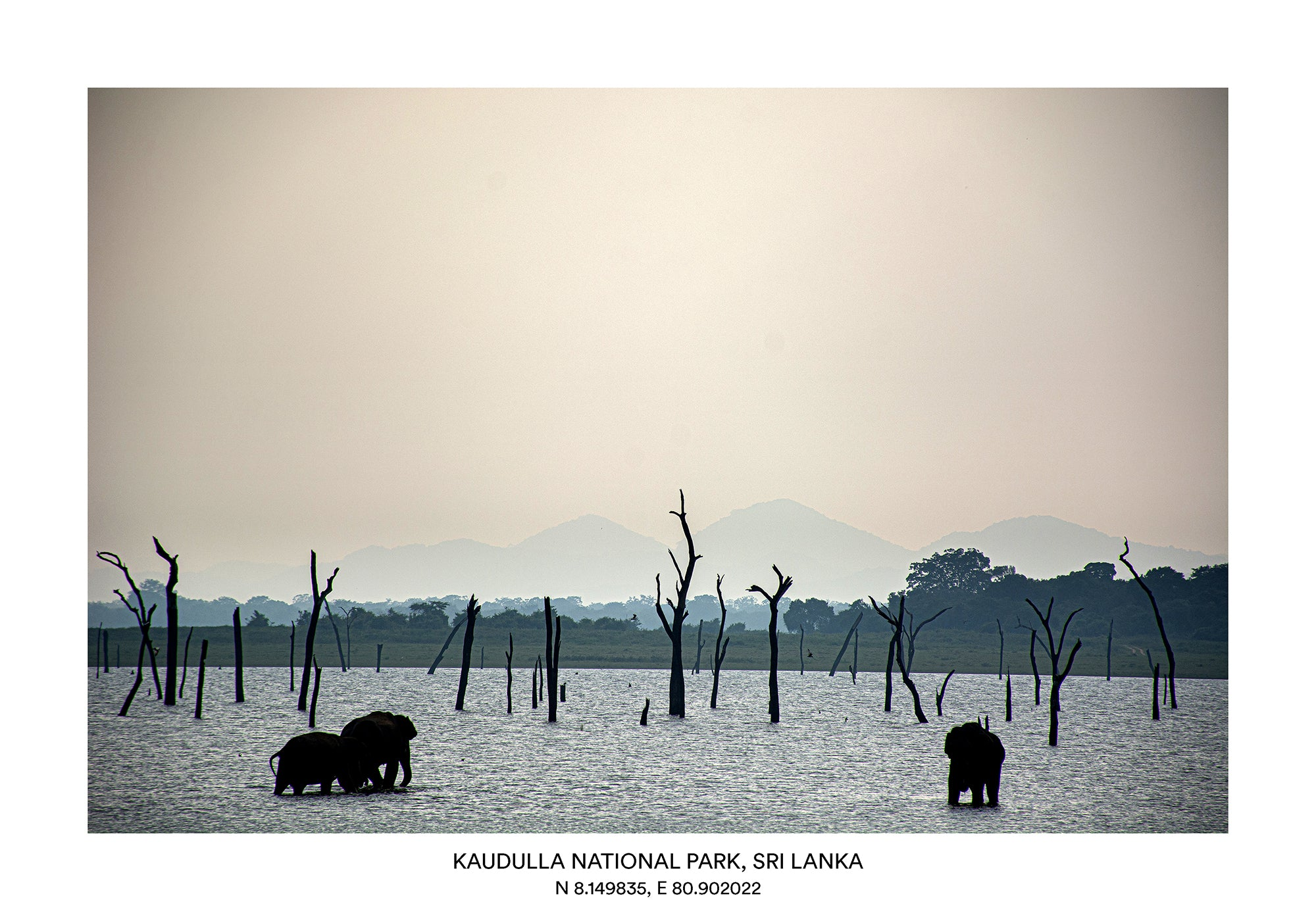 LKA - Kaudulla National Park, Sri Lanka 2