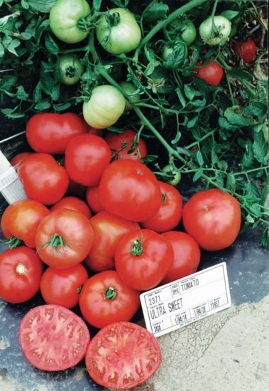 Tomato 'Ultra Sweet' AVAILABLE STARTING MAY 20