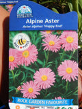 "4"" Alpine Aster 'Happy End'"