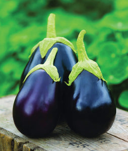 "4"" Eggplant AVAILABLE STARTING MAY 20"