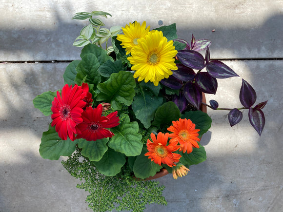 Gerbera Patio Planter 10