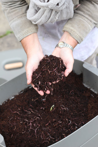 Hands holding compost - wiggly wigglers