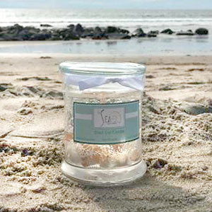 The Sea Shell Gel Candle