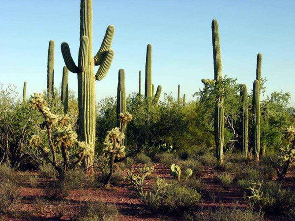 Top Five Desert Destinations