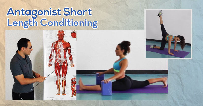 Antagonist Short Length Conditioning