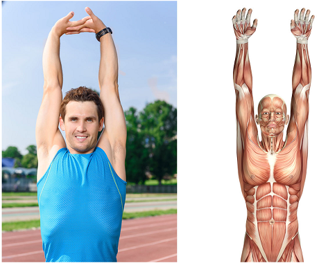If You Have Chronic Shoulder Pain This Article Will Change Your Life