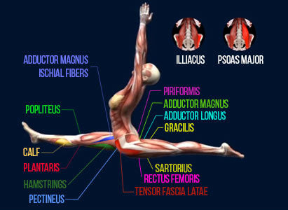 front split tensor fascia lata latae hip flexors tight flexible flexibility stretching