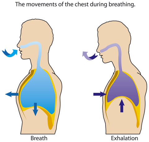 breath breathing kip pike forward fold gymnastics easyflexibility kinesiological stretching